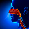 A close up of a patients sinuses suffering from pain.